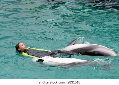 Dolphins playing with swimmers