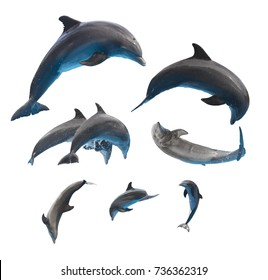 dolphins set, jumping and leaping dolphins isolated on white background