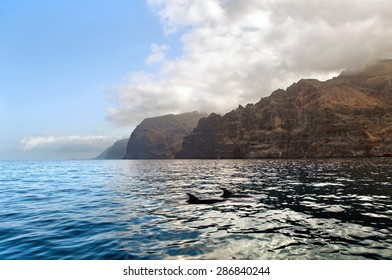 Dolphins at the south coast of Tenerife. Canary Islands. Spain
