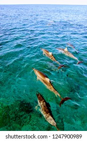 Dolphins swim in formation
