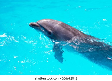 dolphins swim in the pool close-up
