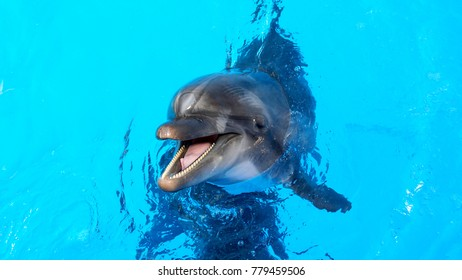 dolphins swimming in the clear blue water of the pool closeup