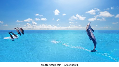 Dolphins swimming,jumping on blue ocean cloud,marine wildlife background