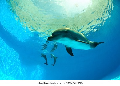 Dolphins under water looking at the camera
