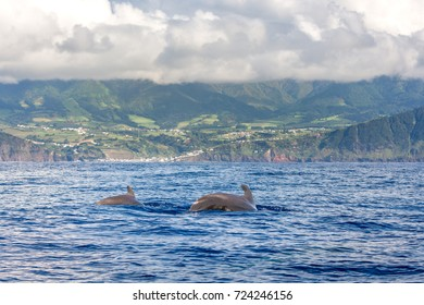 Dolphins and whales watching in Sao Miguel Island, Azores, Portugal
