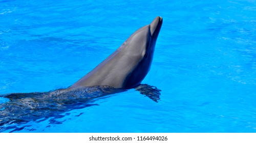 Dolphins are a widely distributed and diverse group of aquatic mammals. They are an informal grouping within the order Cetacea, excluding whales and porpoises