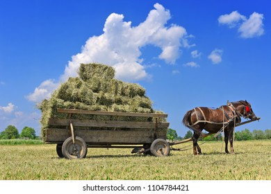 Dolyna, Ukraine - June 1, 2018: Transportation of hay by horse-drawn transport in the fields of organic farm near the town Dolyna, Western Ukraine.