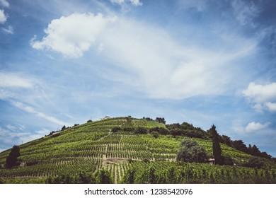 Domainet viticultural landscape in France