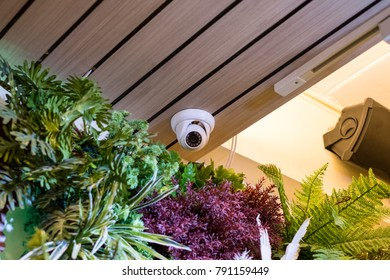Dome security CCTV Hidden on corner room with plant decoration