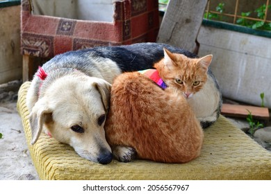 Domerstic dog and cat with warning collar against the natural instinct to hunt birds