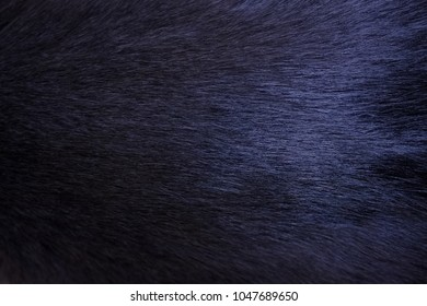 Domestic animal (cat) wool texture dark blue color with space for copy or text