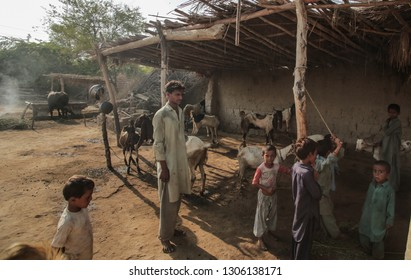 Domestic Animals Goat And Sheeps Standing Inside A House Of Villager In Sindh Pakistan 27/08/2017