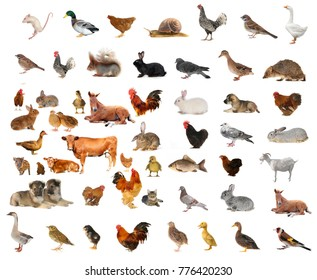 Domestic animals and various Jiaqin