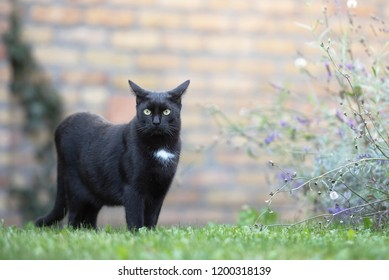 Domestic black cat on the grass