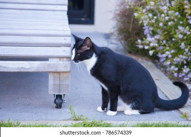 Domestic black and white cat in the garden in New Zealand