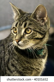 Domestic cat at the animal shelter waiting to be adopted