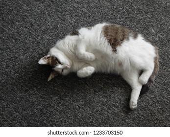 Domestic cat asleep on a gray palasade.