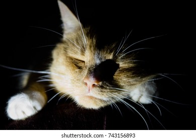 Domestic cat caught in the shadows