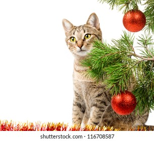 Domestic cat and Christmas tree on white