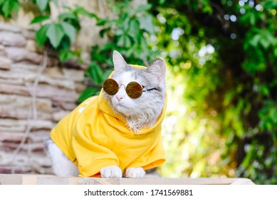 Domestic cat, dressed in a hoodie and sunglasses, sits on a box on the street