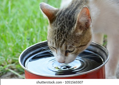 Domestic cat drinking water from red pot on green grass in a hot sunny day