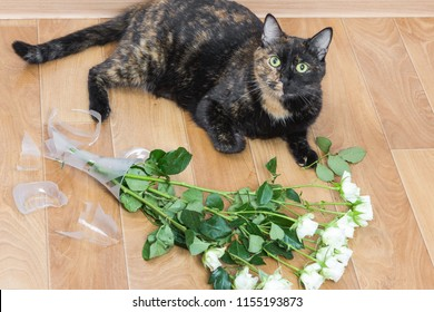 Domestic cat dropped and broken glass vase of flowers. Concept of damage from pets.