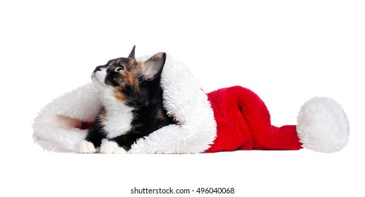 Domestic  cat lying in a santa hat on a white background looking up to the copy space area
