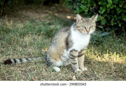 domestic cat in nature