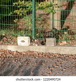 Domestic cat on return from foray crawls through a fence hole