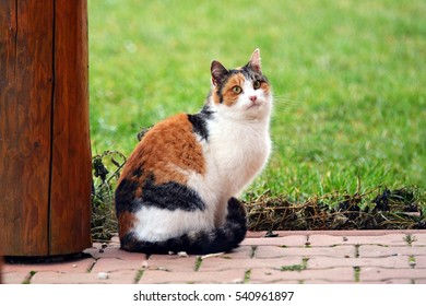 Domestic cat on the street