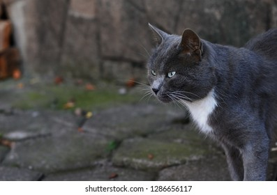 Domestic cat outdoors in the city