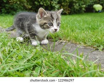 domestic cat outside in the field