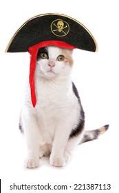Domestic cat pirate