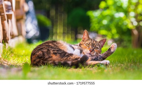 Domestic cat is playing on the grass