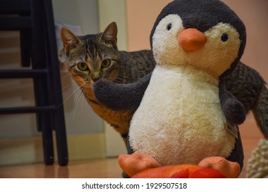 Domestic cat playing with a stuffed penguin