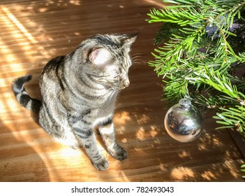 Domestic cat and silver Christmas tree ornament