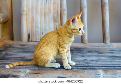 Domestic cat sitting on wooden bench in the yard. Red kitty in the village. Summer vacation for pet. Cute and lovely animal photo. Striped cat looking at a bird. Sweet kitten playing in the ground