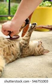 A domestic cat stretching while being brushed by a woman.
