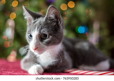 Domestic cats and kittens