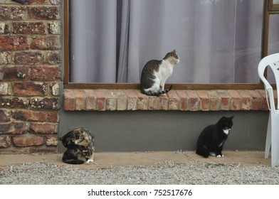 Domestic cats on a farm