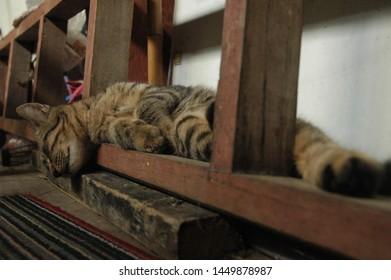 domestic cats sleep under the stairs