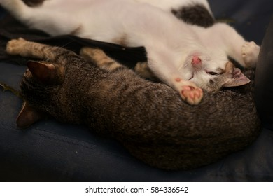 Domestic cats sleeping on an old couch. (Selective focusing)