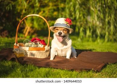 Domestic dog at picnic at sunny summer day