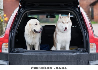 Domestic dog sitting in the car trunk. Preparing for a trip home after walking in park. Transportation of pets in the car.