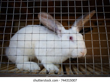 Domestic farm rabbits in cage at animal farms.Cute rabbits locked in incubator cages.Livestock food animals in cage.Cute furry white rabbit grows on farm