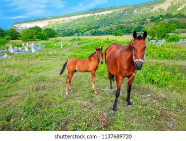 domestic foal and mare on the green meadow