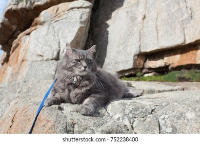 Domestic gray cat in mountains