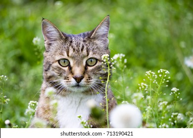 Domestic grey cat in the garden , cat in the grass resting