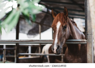 Domestic horse in a stable cage. concept of livestock and animal abuse