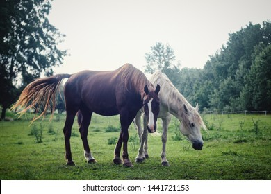 Domestic horses on a field